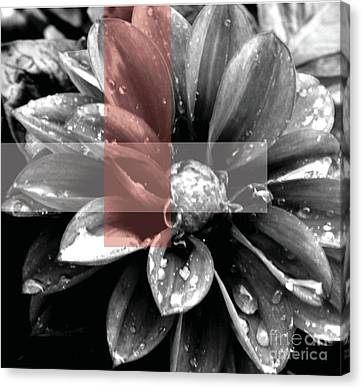 Red Rain Blossom Canvas Print by Jamie Lynn