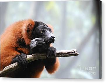 Red Ruffled Lemur With Sharp Fangs Canvas Print by DejaVu Designs