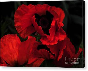 Red Ruffles Canvas Print by Kathleen Struckle