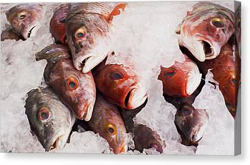 Red Snapper Canvas Print by Aged Pixel