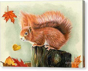 Red Squirrel In Autumn Canvas Print by Sarah Batalka