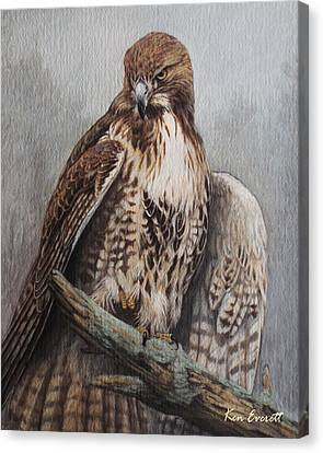 Red Tail Hawk Canvas Print by Ken Everett