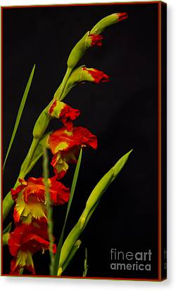 Red Canvas Print by Timothy J Berndt