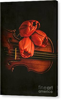 Red Tulips On A Violin Canvas Print by Edward Fielding