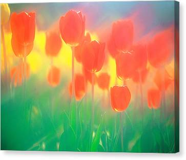 Red Tulips Canvas Print by Panoramic Images