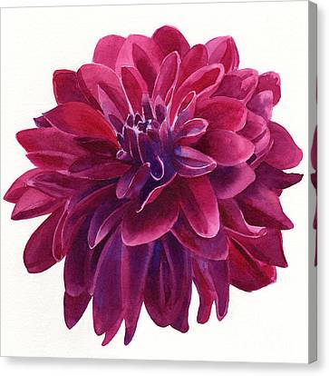 Red Violet Dahlia Square Design Canvas Print by Sharon Freeman