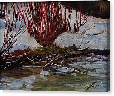 Red Willows Canvas Print by Suzanne Tynes