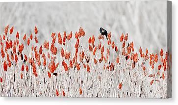 Red-winged Blackbird Canvas Print by Steven Ralser