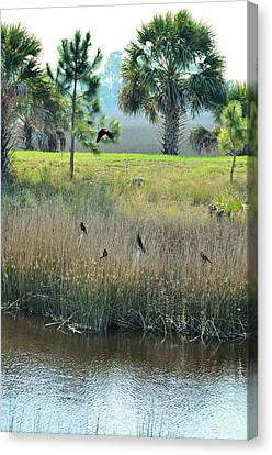 Red Winged Blackbirds Canvas Print by Jan Amiss Photography