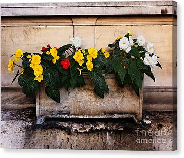 Red Yellow And White Begonias Canvas Print by Louise Heusinkveld