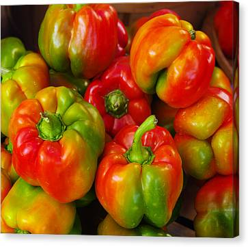 Red-yellow-green Peppers Canvas Print by John Ayo
