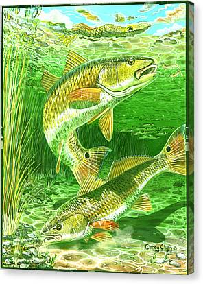 Redfish Haven In0018 Canvas Print by Carey Chen