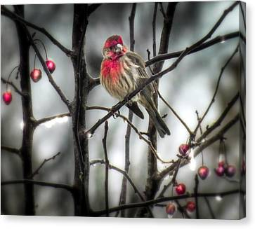 Reds Of Winter Canvas Print by Karen Wiles