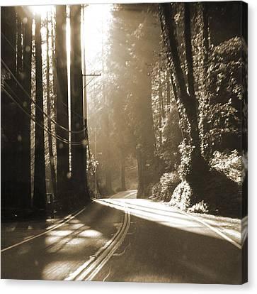 Redwood Drive Canvas Print by Mike McGlothlen