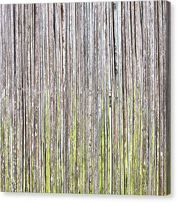 Reeds Background Canvas Print by Tom Gowanlock