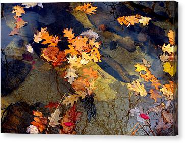 Reflection Canvas Print by Marcia Lee Jones