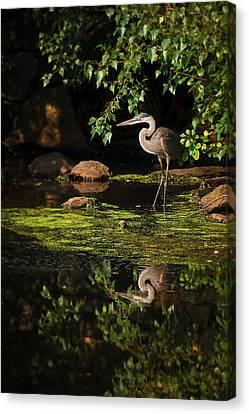Reflective Heron Canvas Print by Sylvia J Zarco