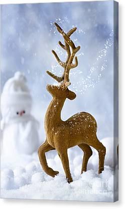 Reindeer In Snow Canvas Print by Amanda Elwell
