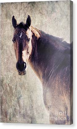 Reliability Canvas Print by Betty LaRue