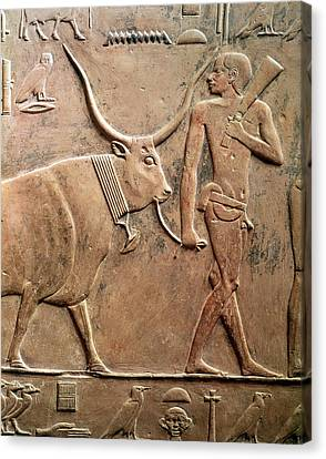 Relief Depicting A Peasant Leading A Cow To Sacrifice, From The Mastab Of Ptah-hotep Canvas Print by Egyptian 5th Dynasty