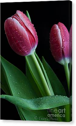 Reminder Of Spring Canvas Print by Tracy  Hall