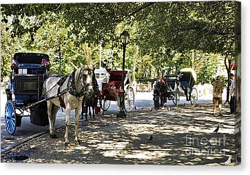 Rest Stop - Central Park Canvas Print by Madeline Ellis