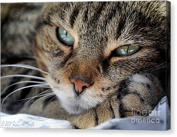 Rest Canvas Print by Susan Smith