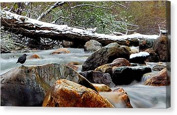 Restful Nature Canvas Print by Steven Milner