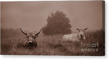 Resting Beasts Canvas Print by Linsey Williams