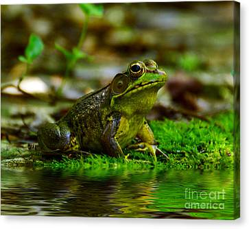 Resting In The Shade Canvas Print by Kathy Baccari