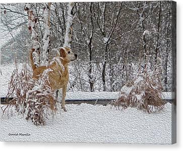 Retriever And Fresh Snowfall Canvas Print by Gerald Marella