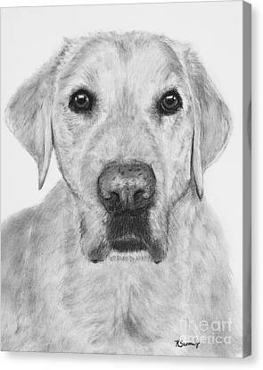 Retriever Lab Drawing Canvas Print by Kate Sumners