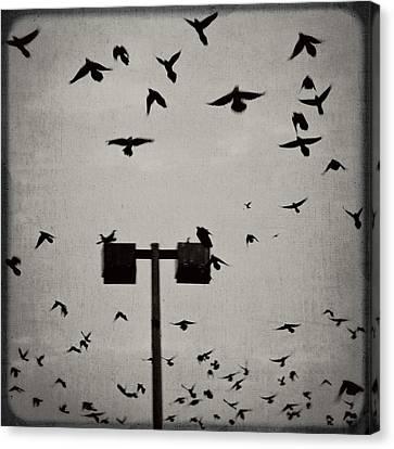 Revenge Of The Birds Canvas Print by Trish Mistric