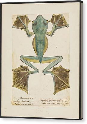 Rhacophorus Tree Frog Canvas Print by Natural History Museum, London