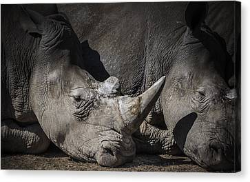 Rhino Canvas Print by Chris Fletcher