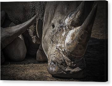 Rhino Portrait Canvas Print by Chris Fletcher