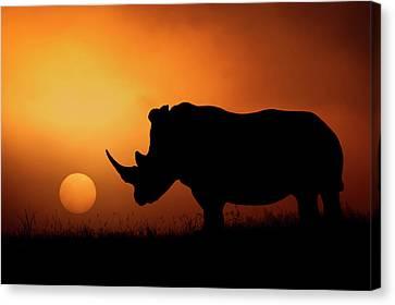 Rhino Sunrise Canvas Print by Mario Moreno