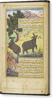 Rhinoceros Canvas Print by British Library