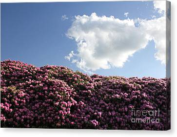 Rhododendron Canvas Print by Melissa Petrey
