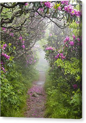 Rhododendron Time In North Carolina Canvas Print by Bill Swindaman