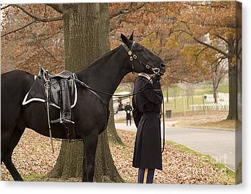 Riderless Horse Canvas Print by Terry Rowe