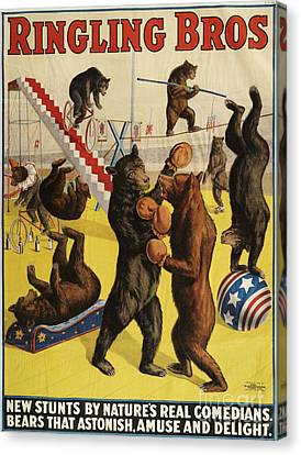 Ringling Bros 1900s Bears Performing Canvas Print by The Advertising Archives