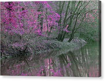 River Of Pastel Canvas Print by Lorna Rogers Photography