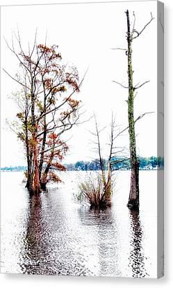 River Trees - Elizabeth City Nc Canvas Print by Dan Carmichael