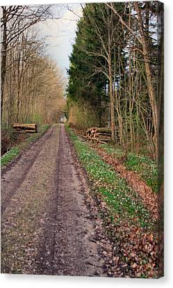 Road In Stakrode Forest Canvas Print by Asbjorn Lonvig