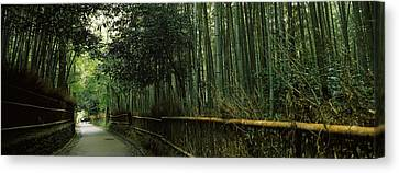 Road Passing Through A Bamboo Forest Canvas Print by Panoramic Images