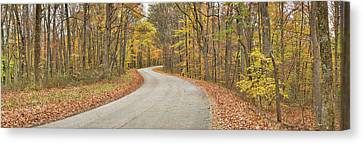 Road Passing Through A Forest, Brown Canvas Print by Panoramic Images