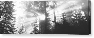 Road, Redwoods Park, California, Usa Canvas Print by Panoramic Images