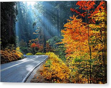Road To Glory  Canvas Print by Lynn Bauer