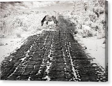 Road To No Where Canvas Print by Jillian  Chilson